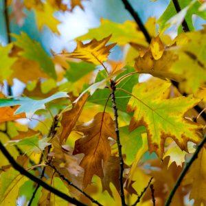 congreslocatie uitzicht herfst bijzondere inspirerende evenementen