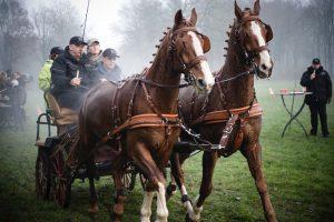 Teambuilding samenwerken paardenmennen span of control