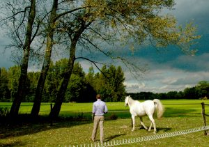 leiderschapstraining teambuilding Span of control paardencoaching
