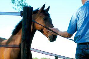 leiderschapstraining Span of control paardencoaching paardenfluisteren