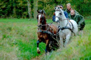 leiderschapstraining teambuilding Span of control paardenmennen