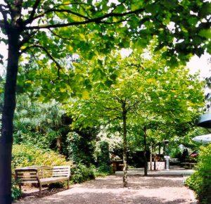 Tuin vergaderlocatie het glazen huis groen landelijk